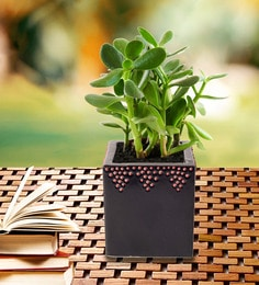 b77c07e18e2 Buy Green Ceramic Snail Planter by Unravel India Online - Pots ...