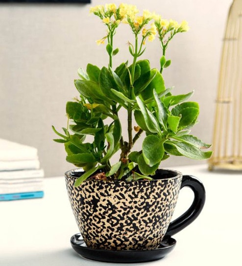 Buy Brown Ceramic Cup Saucer Planter By Unravel India Online Pots