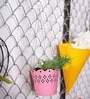 Pink Hanging Planter by Color Palette