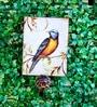Birdie Wooden Multicolour Hooks by Deziworkz