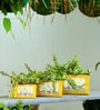 Rectangular Yellow Victorian planters/tubs (Set of 3) by Deziworkz