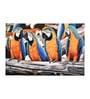 Fizdi Canvas 36 x 0.2 x 24 Inch Four Macaw Unframed Art Painting
