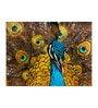 Fizdi Canvas 36 x 0.2 x 24 Inch Peacock Unframed Art Painting