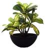 Green Bonsai Plant In Ceramic Pot by Fourwalls