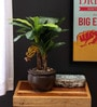 Green Polyester Artificial Banana Bonsai Plant with Ceramic Vase by Fourwalls