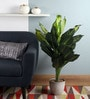 Green Polyester Artificial Dieffenbachia Floor Plant by Fourwalls