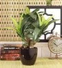 Green Polyester Dracaena Bonsai with Ceramic Vase by Fourwalls