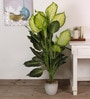 Green Polyester 51 Leaves Artificial Dieffenbachia Floor Plant by Fourwalls
