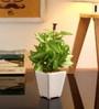 Mini Wandering Plant in White Ceramic Vase by Fourwalls