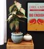 Fourwalls Multicolor Polyester Premium Range Caladium In Ceramic Vase