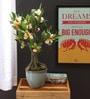 Multicolor Polyester Premium Range Frangipani In Ceramic Vase by Fourwalls