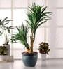 Premium Range Yucca in Ceramic Vase by Fourwalls