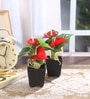 Red Synthetic Artificial Anthurium Plant with Vase - Set of 2 by Fourwalls