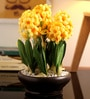 Yellow Hyacinth in Ceramic Vase by Fourwalls