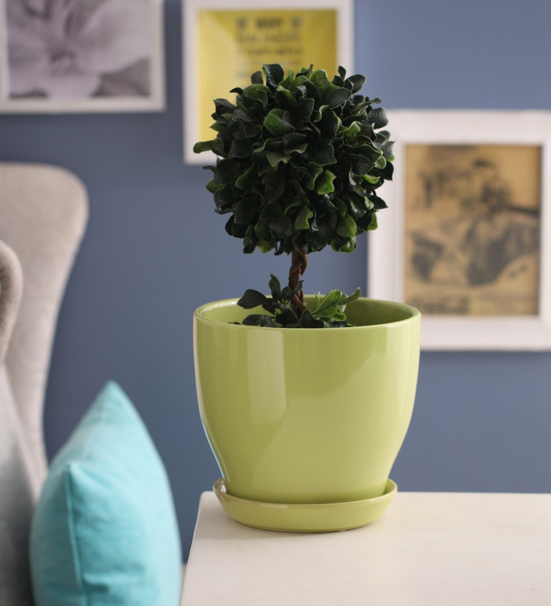 Light Green Glazed Ceramic 8 x 8.5 Inch Table Top Planter with Plate by Gaia