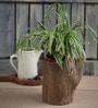 Gaia Woodlike planter - Simple Yet Elegant