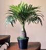 Green Polyester Bonsai Palm Tree by Ginni Bloom