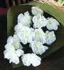 Ginni Bloom White PVC & Synthetic Carnations
