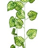Green PVC & Synthetic Artificial Philo Plant Creeper - Set of 2 by Ginni Bloom