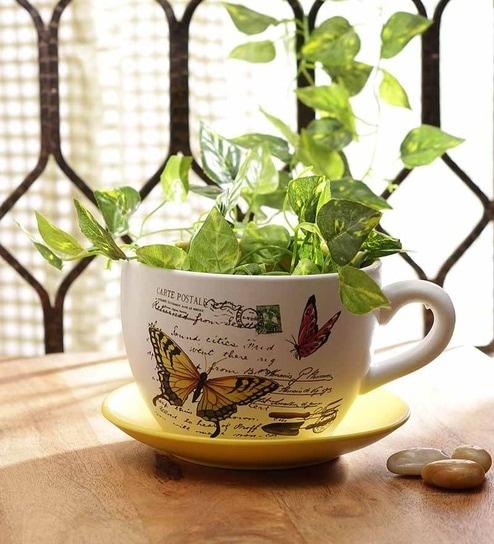 Buy Go Hooked Cup Saucer Planter Online Pots Planters Garden