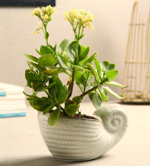 ef3fbf5a7e4 Buy Grey Ceramic Snail Planter by Unravel India Online - Pots - Pots    Planters - Decor - Pepperfry Product