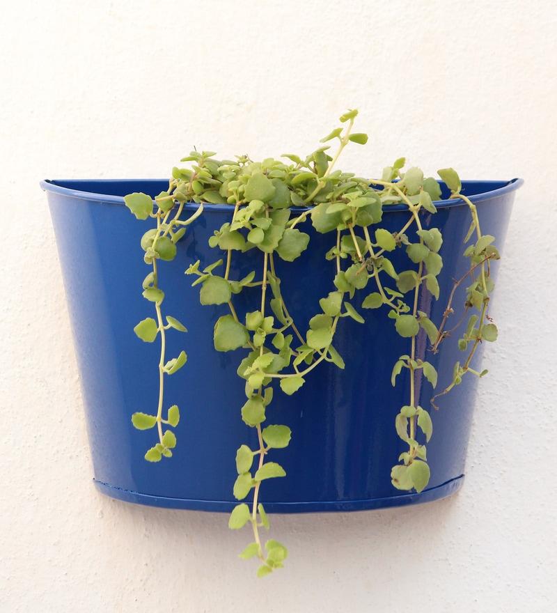 Blue Metal Wall Planter by Green Gardenia