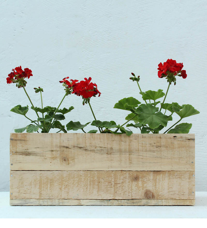 Table Top Wooden Box Planter-Natural by Green Gardenia