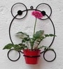 Frog Wall Bracket With Red color Metal Bucket by Green Gardenia