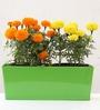 Green Gardenia Table Top Green Metal Rectangular Planter