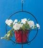 Metallic Hanging Basket with Red Pot by Green Gardenia