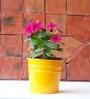 Green Gardenia Table Top Cone Pot In Yellow