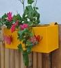 Green Gardenia Yellow Railing Square Box Planter