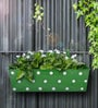 Polka Dot Rectangle Planter in Green Colour by Green Girgit