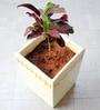 Maadam Planter by Greymode