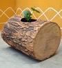 Veambu Brown Planter by Greymode