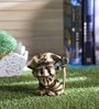 Handecor Brass Pirate Pen Stand