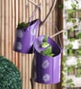 Purple Iron Bucket Planter Set by Aasra