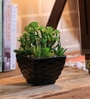 Black & Green Ceramic Artificial Mixed Succulent in Pot by Importwala
