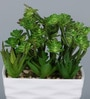 Importwala Green & White Ceramic Artificial Mixed Succulent in Pot