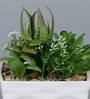 Importwala Green & White Ceramic Artificial Succulent in Pot