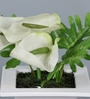 Off White Iron Artificial Cala Lily Flowers with Pot by Importwala