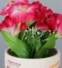 Importwala Pink Ceramic Flowers in Pot