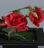 Importwala Red Iron Artificial Rose Flowers with Pot