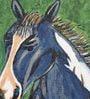 Canvas & Acrylic 11 x 1.5 x 8 Inch Black Horse Original Framed Painting by Krish Art