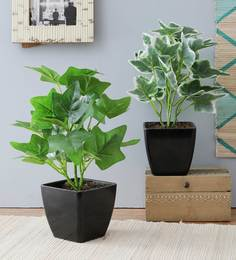 Multicolor Plastic Combo Of Green Ivy & White Ivy Artificial Plant In Black Pots