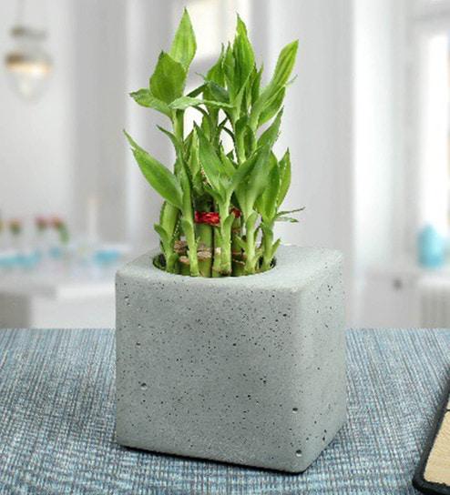 85ed1d96558 Buy Grey Concrete Juju Table Planter by Conkreate Online - Pots - Pots    Planters - Decor - Pepperfry Product