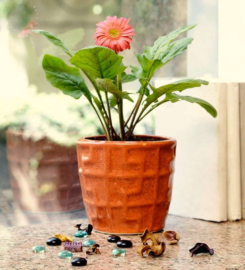 c4aa5fa691d Buy Ochre Stoneware Hand Made Planter by Unravel India Online - Pots - Pots    Planters - Decor - Pepperfry Product