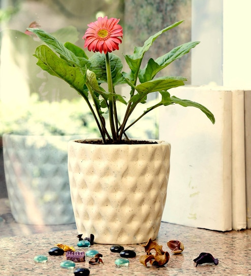 3212d24f8f3 Buy Off-White Stoneware Hand Crafted Studio Pottery Planter by Unravel  India Online - Pots - Pots   Planters - Decor - Pepperfry Product