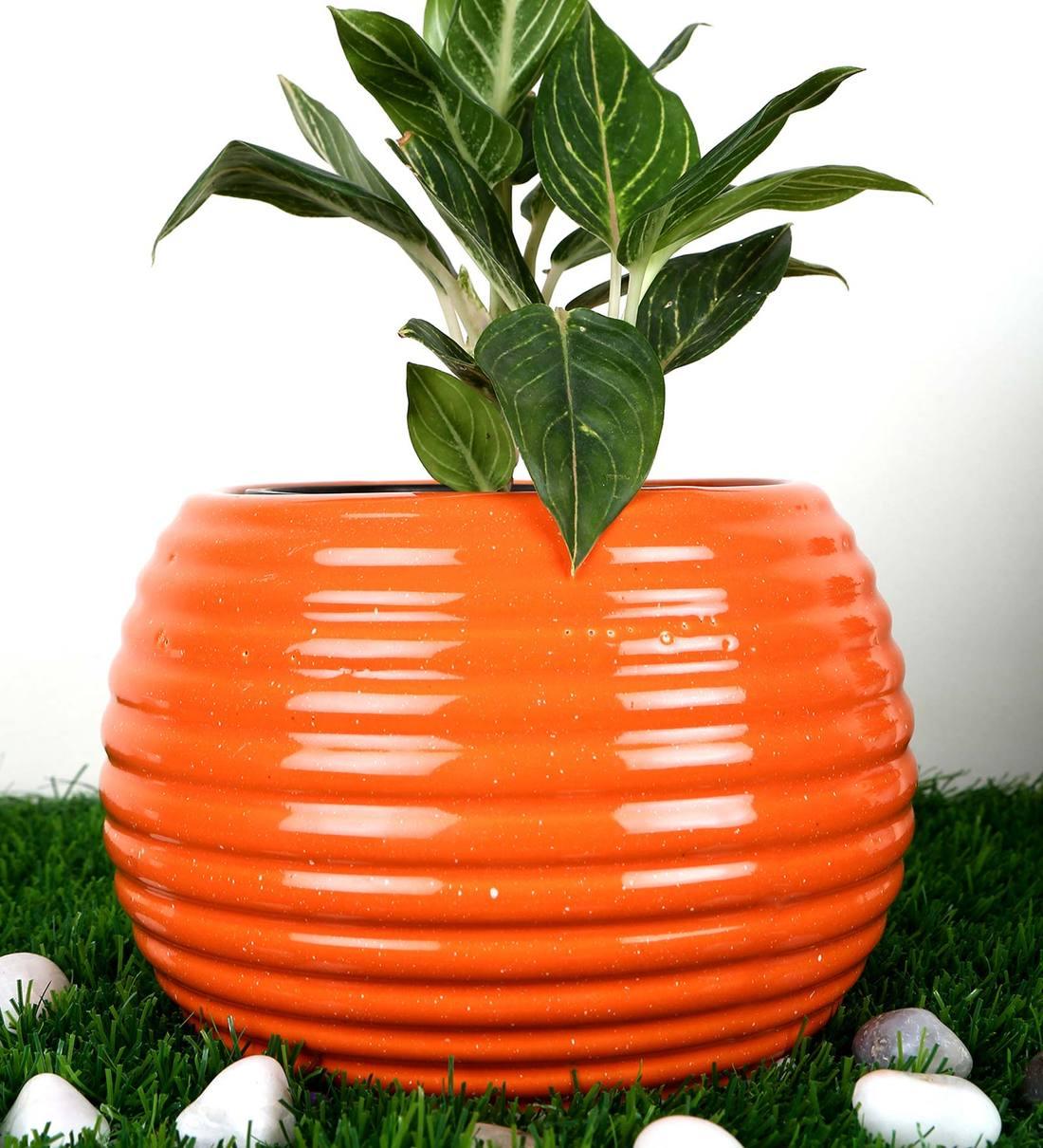 Buy Orange Ceramic Churi Bowl Shape With Straight Lines Medium Planter By Justoriginals Online Floor Planters Pots Planters Home Decor Pepperfry Product