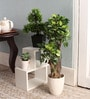 Green Polyester Capensia Ficus Artificial Plant by Pollination